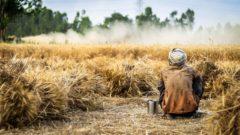 biodiverzita klíma životné prostredie poľnohospodárstvo udržateľnosť