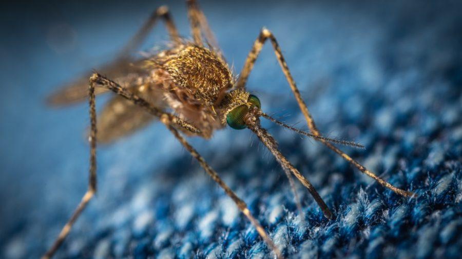 komáre Bill Gates hmyz zahraničie Florida
