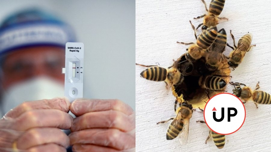 včely testovanie