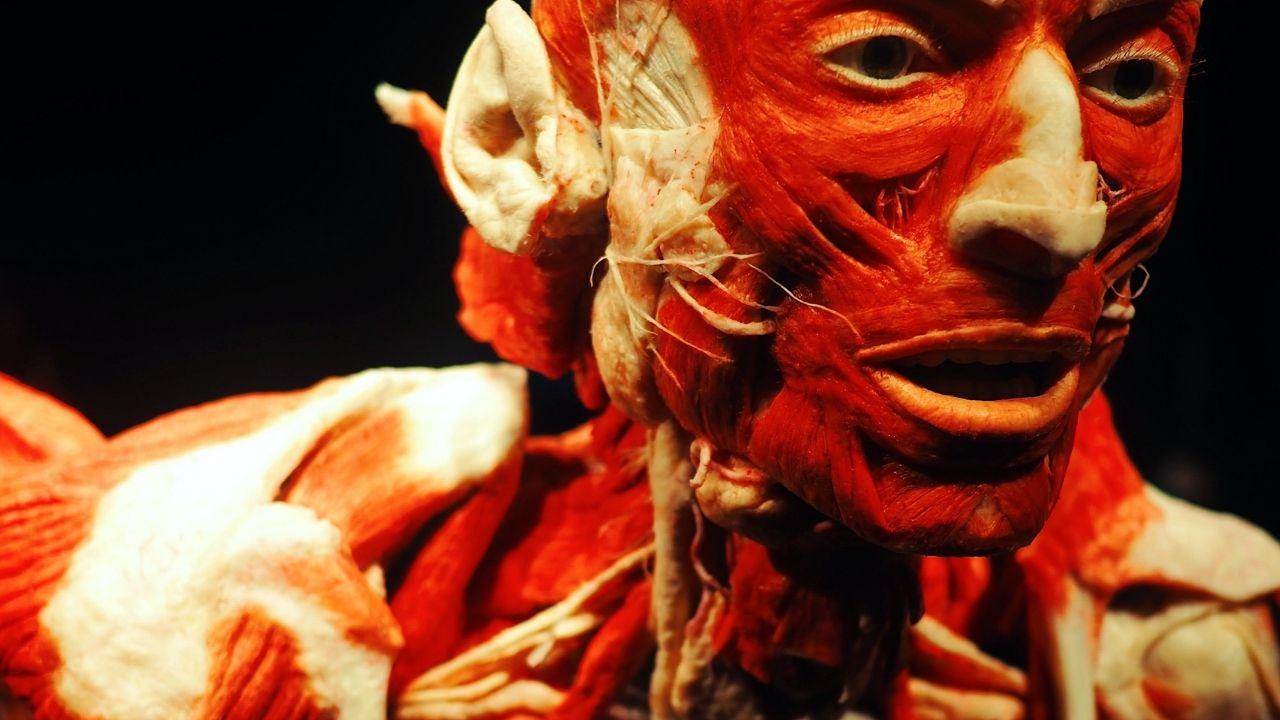 anatómia tela