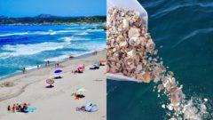 Sardínia piesok mušle kradnutie trestný čin