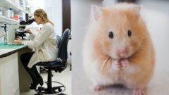 myši experiment