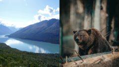 Medveď na Aljaške