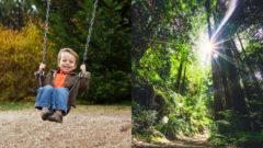 les, dieťa