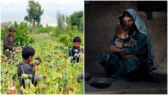 Afganistan ópium