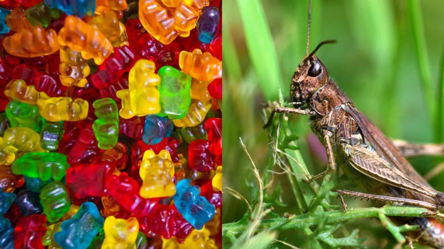 jedly hmyz