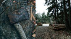 Výrub stromov škodí klíme