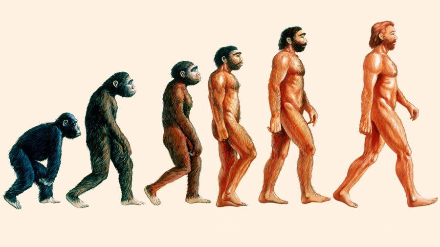 neandertálci história odevy archeológia štúdia