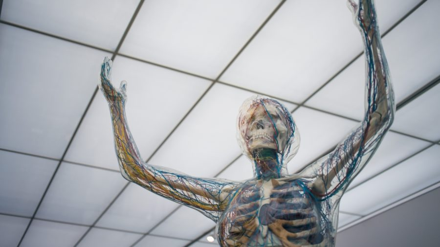 nervový systém